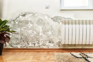 mold mildew home remediation